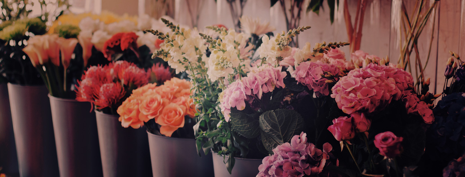 Fresh flowers, plants gifts and cards...